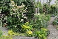 4月の宿根草たち - バラと遊ぶ庭