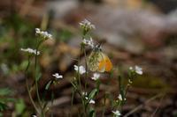 オレンジ最終便 - 安曇野の蝶と自然