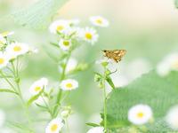 初夏の気配 - M2_pictlog