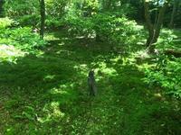 緑猫 - Healing Garden  ー草庭ー