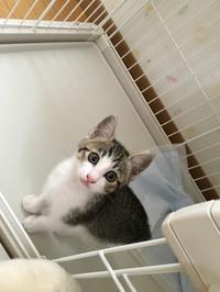 美猫な仔猫 - gin~tetsu~nosuke