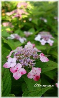 紫陽花の小路&E.L.6.15 - 日々楽しく ♪mon bonheur