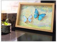 蝶の標本とイラストのコラボ商品がミンネで販売開始♪ - ** アトリエ Chica **