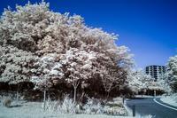 カラー赤外と広角 - - 光景彡z工房 - ◇ SeasonII ◇