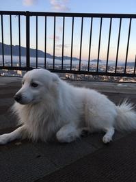 再度、迷子犬のお知らせ - ペットケアタウン ブログ