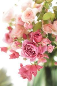 6月も和ばらが人気&強運が強運を呼ぶお話☆ - お花に囲まれて
