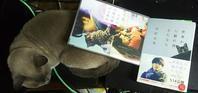 DVD鑑賞中 - MINKWIN Cattery &Pretty Aki