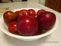 美味しそうなバラ科の果実(スモモ・ベニバスモモ・ウメ)です。 - デジカメ散歩悠々