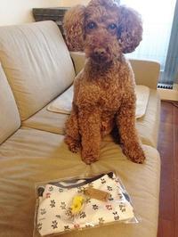 ココちゃん5歳のバースデープレゼント♪ - shoot !!