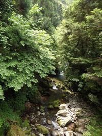 『渓流と滝と苔達の風景を・・・・・』 - 自然風の自然風だより