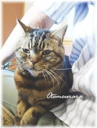 Happy Caturday ♪ とっと~と(='x'=) - 日々楽しく ♪mon bonheur