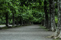樹の下で - memory