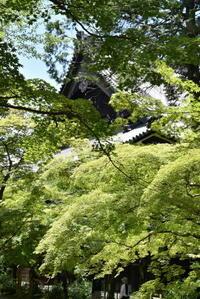 京都真如堂 - 高原に行きたい