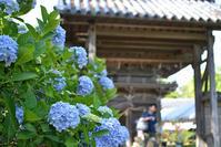 住吉神社の第7回あじさいまつり - AR75TS