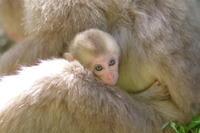赤ちゃんに癒された日♡ - 神奈川県相模原市の写真サークル「なちゅフォト」ブログ!