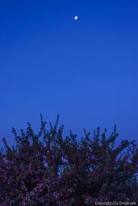 頂の花月 - ひつじ雲日記