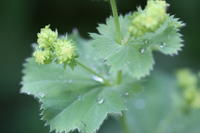 """6年めハーブ達  - 英国メディカルハーバリスト&アロマセラピストのブログ""""Herbal Healing 別館"""""""