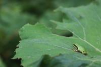 もうすぐ夏至 - 週刊「目指せ自然農で自給自足」