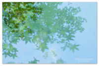Sun 3 Sunday。青もみじの青空。 - Yuruyuru Photograph