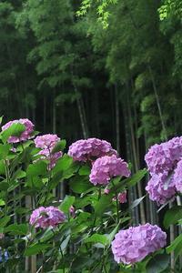 初夏の三浦アルプスを歩くその5 - 季節(いま)を求めて