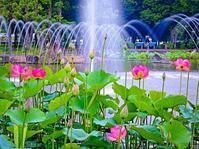 2018.6.17噴水とハスの花(府中市立郷土の森公園) - ダイヤモンド△△追っかけ記録