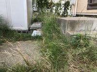 さび猫ちゃん - ☆kumi.cr日記☆