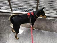ふらふらヘトヘト・・・リオ(犬)と散歩 - 化学物質過敏症・風のたより2