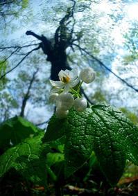 大樹の下に咲く - 源爺の写真館