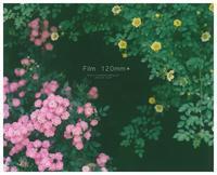 Rose rame* - ココロハレ*