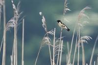 高原の鳥たち♪ - happy-cafe*vol.2