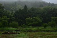 6月17日 雨降り散歩① - 光画日記