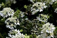 水生植物公園みずの森・初夏に咲く - ちょっとそこまで