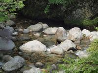 『粥川の流れと矢納ヶ渕の滝と植物達・・・』 - 自然風の自然風だより