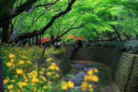 青もみじ!  ~北野天満宮~ - Prado Photography!