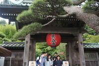 鎌倉・あじさい散歩(長谷寺) - マルオのphoto散歩