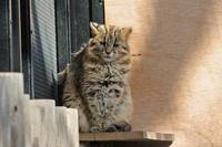 まったりツシマヤマネコ「ノリ」ちゃんとアムールヤマネコのターゲットトレーニング - 続々・動物園ありマス。