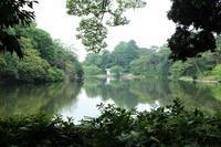 梅雨時の公園 - さいたま日記