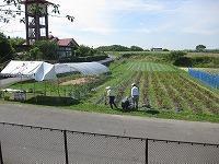 ジャガイモ収穫体験 - げんきの郷 「体験農園」