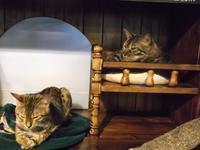 ルシュール「三島由紀夫」 - シェークスピアの猫