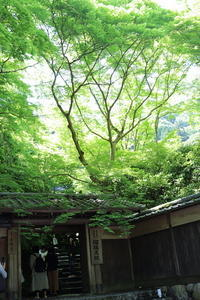:::Rurikoin@Kyoto - happiness:::