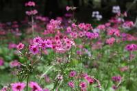 きっとそれが大切なこと - CHIROのお庭しごと