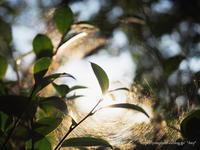 蜘蛛の糸フィルター - *Any*
