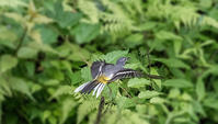 羽模様!? - 趣味の野鳥撮影