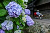 梅雨時季の花沢 - やきつべふぉと