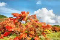赤城山・白樺牧場のレンゲツツジ 3 - 光 塗人 の デジタル フォト グラフィック アート (DIGITAL PHOTOGRAPHIC ARTWORKS)