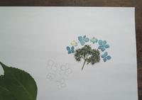 押し花から布花の型をとる - 布花作りはじめました