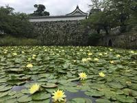"""すいれん…綺麗に咲いています(^_^*)in舞鶴公園 - 西薗守の""""子育て"""""""