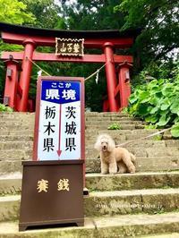 鷲子山神社あじさい祭り2018♪ - 君の瞳に恋してる♪