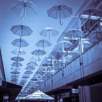 満開の傘の花 - Silver Oblivion