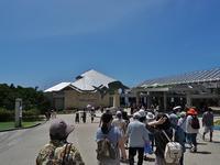 ツアーで沖縄、ついでに探蝶記(肆) - 不思議の森の迷い人